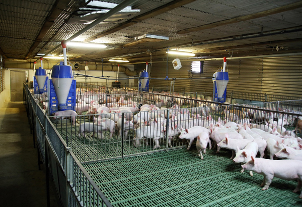 台达自动化监控解决方案,为畜牧饲养业实现产业智能升级