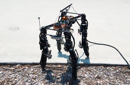 四足机器人的进化,只为适应复杂地形